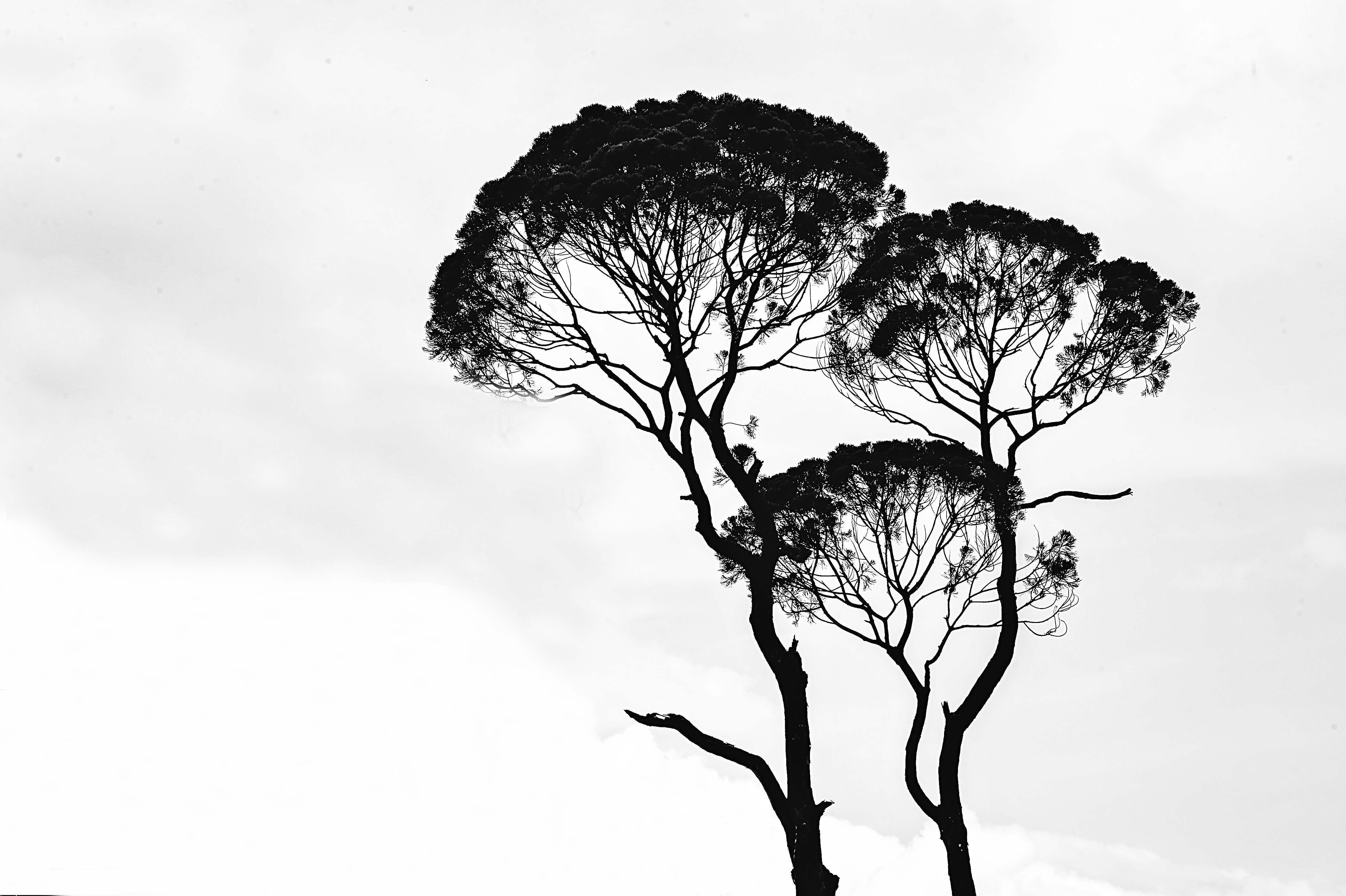 art-black-and-white-branches-962312